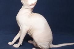 Кошка на вязку - Tasha Fortune Nibori (DSX) 2