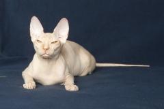 Кошка на вязку - Tasha Fortune Nibori (DSX) 5