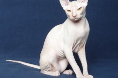 Кошка на вязку - Tasha Fortune Nibori (DSX) 6