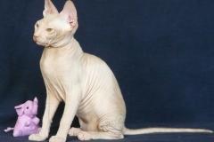 Кошка на вязку - Tasha Fortune Nibori (DSX) 3