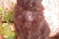 Питомник - Barys-Freze, котята