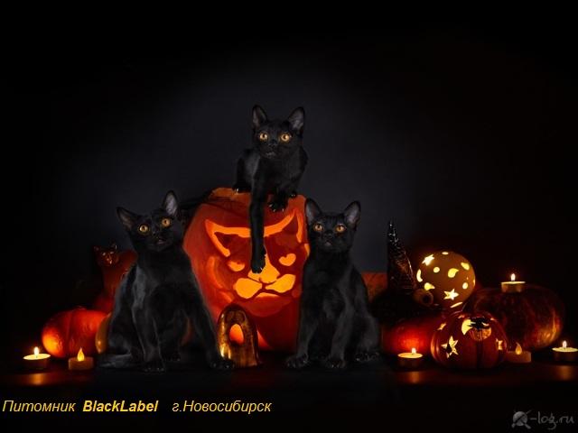 blacklabel-1