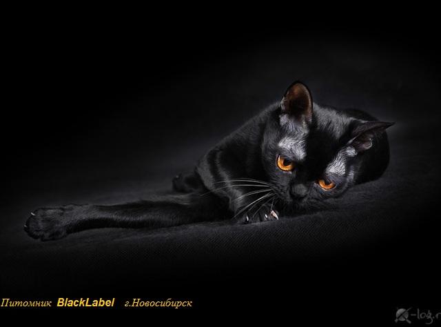blacklabel-2