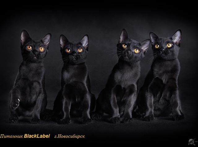 blacklabel-3