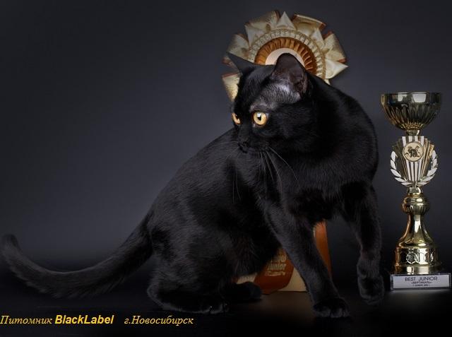 blacklabel-4