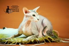 Питомник - Country Desiree