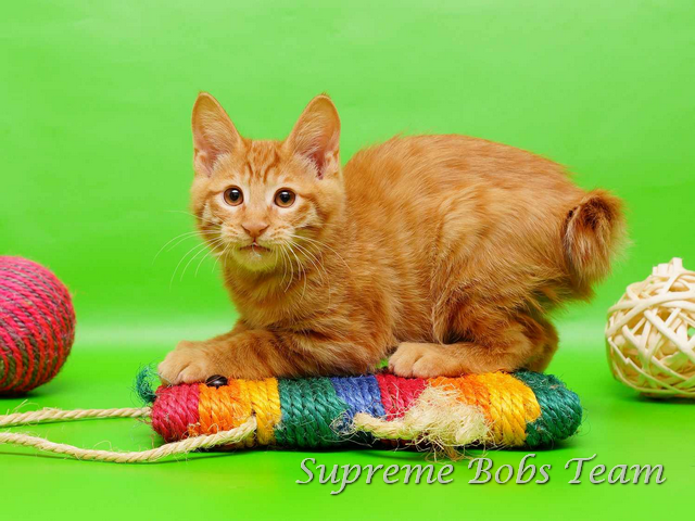 supreme-bobs-team-kitten-1-20150311012308