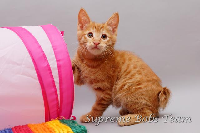 supreme-bobs-team-kitten-4-20150311012308
