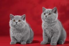 девочка слева, мальчик справа 1-1
