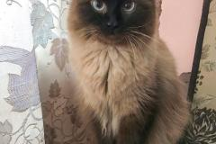 Domestic cat - - Thomas - IMG-20201111-WA0094