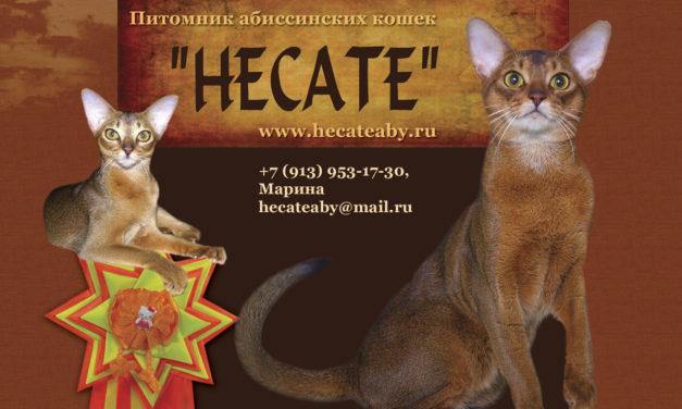 Питомник абиссинских кошек Hecate