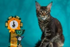 Кот на вязку - Sultan Bey Bars (MCO n 22) 10