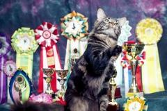 Кот на вязку - Sultan Bey Bars (MCO n 22) 8