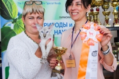 Сибириада 2017 - Шоу восточных кошек