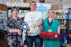 Сибириада 2017 - Шоу британских кошек
