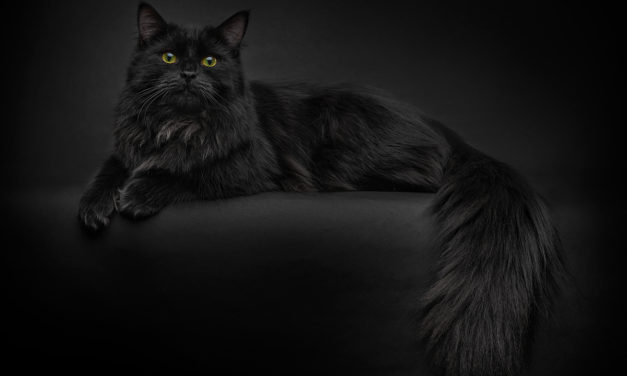 Питомник сибирских кошек «Taiga Tiger»