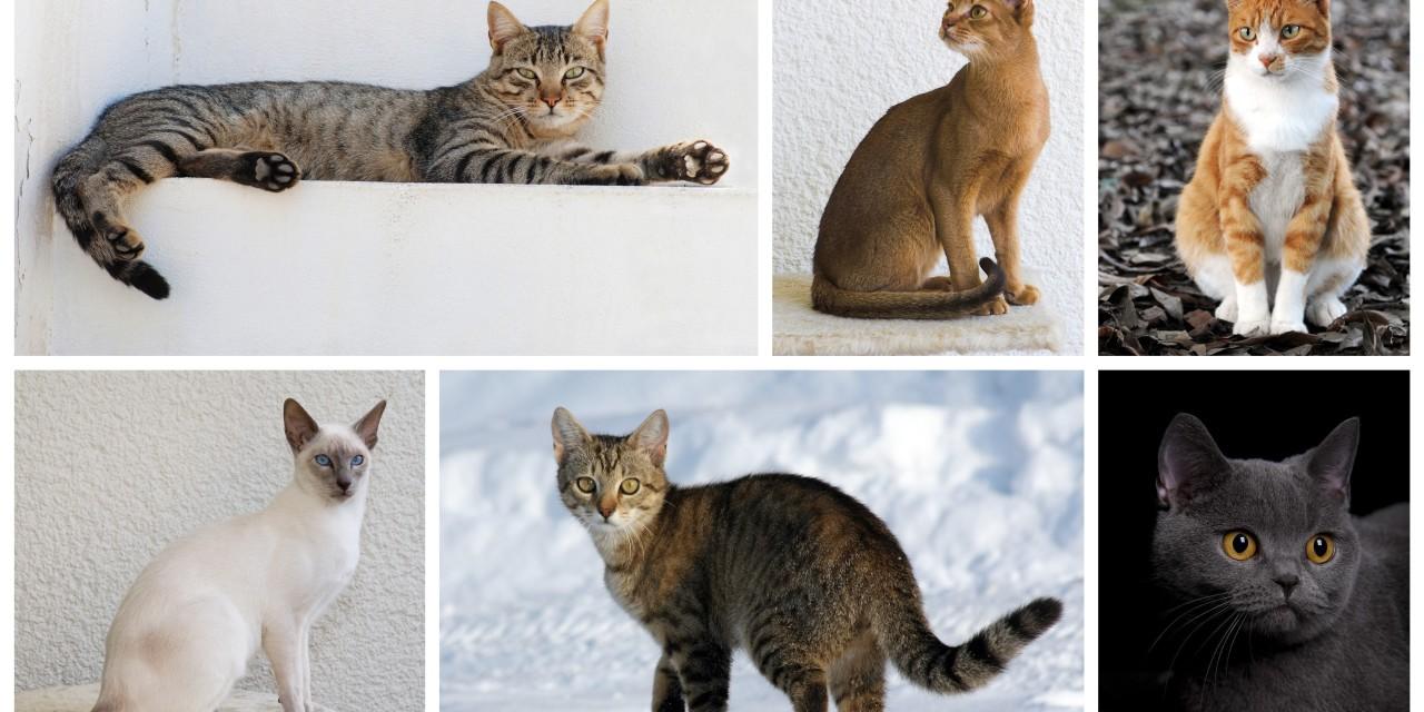 Краткий фелинологический курс для заводчиков и владельцев кошек. 21-23 февраля 2016