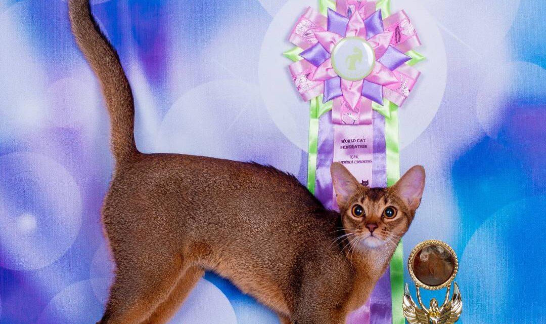 Питомник питомник абиссинских кошек «Mindal flame»